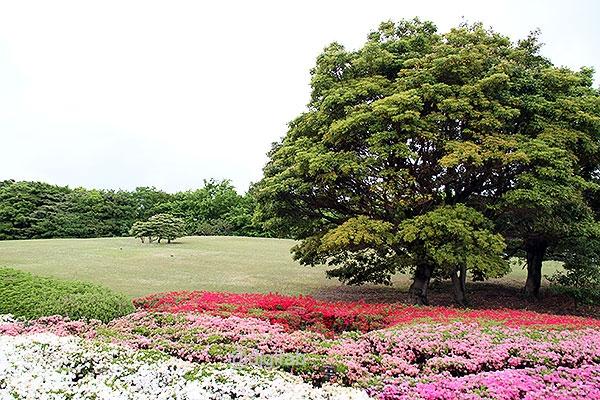 日本庭園のつつじ